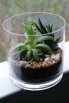 Succulents Of Succulents Terrarium - Succulent Terrarium, Home and Living, Gift , Plants , Living Home Decor , Glass Vase, Drift Wood