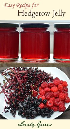 Hedgerow Jelly Recipe ~ a versatile preserve that you can make using your choice of Blackberries, Raspberries, Elderberries, Damsons, Rose-hips and more!