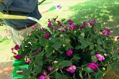 How to Keep Plants Healthy in Containers