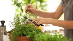 Máta, dobromysl, petržel a další bylinky, díky kterým zhubnete