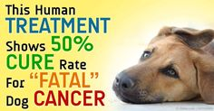 Can Lymphoma In Dogs Be Cured