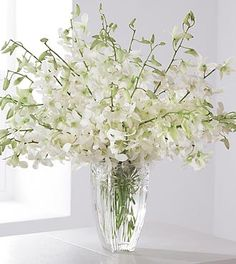 Gallery For > White Cymbidium Orchid In Vase