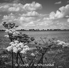 Centre-Val-de-Loire_13 © ScalpL / Art' Photo N&B Série sur : www.artphotonb.com Tirage photo noir et blanc argentique sur papier baryté d'un original numérique couleur. #tiragephoto #tiragenoiretblanc #noiretblanc #argentique #tirage #photo #noir #blanc #papierbaryte #fiber #fiberpaper #artphotonb #blackandwhite #bw #bnw #monochrome #photonoiretblanc #photographienoiretblanc #blackandwhitephotography #bnwphotography #argentik #analogue #analogic #analogicphoto #france #centre #eureetloir