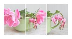 Set of 3 Pink Flower Photography Prints -Bleeding Hearts Roses cottage home decor wall prints