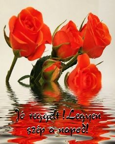 Red Roses & reflection in the Water Types Of Flowers, Love Flowers, Fresh Flowers, Art Flowers, Orange Flowers, Red Roses, Virtual Flowers, Colors Of Fire, Valentines Flowers