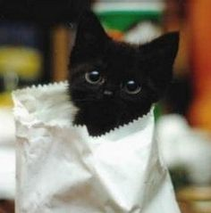 black kittens <3