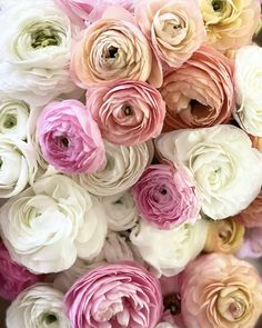 Ranunculus, Cute Animals, Tea, Rose, Flowers, Plants, Beautiful, Instagram, Repeat