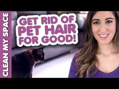 A Few Super-Easy Ways To Clean Up The Pet Hair In Your Home