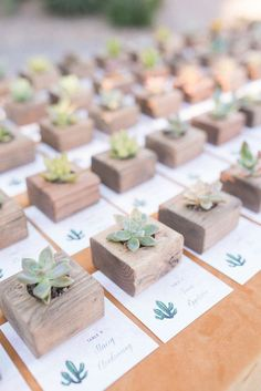 Succulent favors | 100 Layer Cake