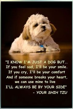 Not just a dog!! ❤️