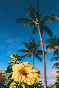 New wallpaper iphone summer hawaii tropical palm trees 27 ideas Beach Aesthetic, Flower Aesthetic, Travel Aesthetic, Moving To Hawaii, Hawaii Travel, Aesthetic Backgrounds, Aesthetic Wallpapers, Kauai Hawaii, Hawaii Resorts