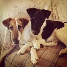 Yul Sky - fox-terrier love Check more at http://hrenoten.com