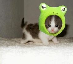 I normally don't like cats but this one is super cute, maybe cause its dressed like a frog....and I like frogs (: