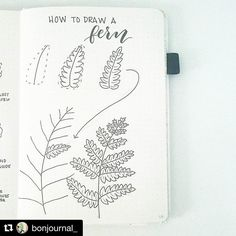 "37 tykkäystä, 1 kommenttia - Bullet Journal Creatif (@bullet.journal.creatif) Instagramissa: ""#Repost @bonjournal_ (@get_repost) ・・・ This week's tutorial is how to draw a fern. It struck me…"""