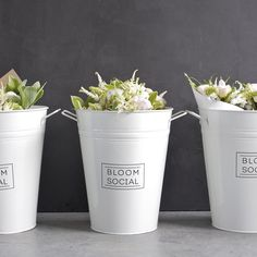 Hello SILVERDALE! We are excited to have the super cool @zavedo (10 Silverdale Street) stocking our blooms  get them fresh from @zavedo tomorrow!  #Silverdale #bloomsocialnz