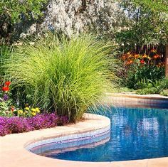 Oriental fountain grass in planter at pool edge pavers for Soil xchange