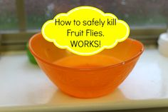 How to Kill Fruit Flies with 3 easy household ingredients! Equal parts water, equal parts vinegar and a squirt of dish soap.