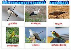 dreamskindergarten Το νηπιαγωγείο που ονειρεύομαι !: Τα αποδημητικά πουλιά φεύγουν : ποιήματα και εποπτικό υλικό