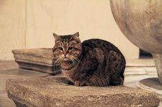 Catsparella: Around The World In 80 Cats #30: Istanbul