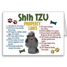 Funny Shih Tzu   ... felted shih tzu dog by amber rose creations shih tzu dog breed shih
