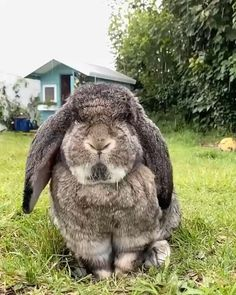 Cute Bunny Pictures, Rabbit Pictures, Cute Animal Photos, Cute Animal Videos, Funny Animal Pictures, Cute Little Animals, Cute Funny Animals, Cute Cats, Funny Dogs