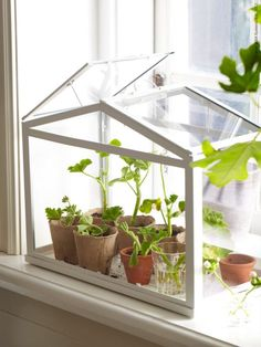 Even in winter we can still grow fresh herbs. In most regions the herb garden is now dormant, but with a little planning you can grow many culinary herbs indoors this winter. An indoor herb garden is not only functional, it can be attractive and provide Outdoor Greenhouse, Small Greenhouse, Greenhouse Plans, Greenhouse Gardening, Greenhouse Wedding, Greenhouse Kitchen, Pallet Greenhouse, Miniature Greenhouse, Window Greenhouse