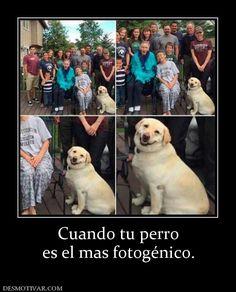 Cuando+tu+perro+es+el+mas+fotogénico.