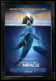 Rent Big Miracle starring Drew Barrymore and John Krasinski on DVD and Blu-ray. Get unlimited DVD Movies & TV Shows delivered to your door with no late fees, ever. One month free trial! John Krasinski, Movie Talk, See Movie, Hd Movies, Movies And Tv Shows, Drama Movies, Movie Poster Frames, Movie Posters, The Incredible True Story