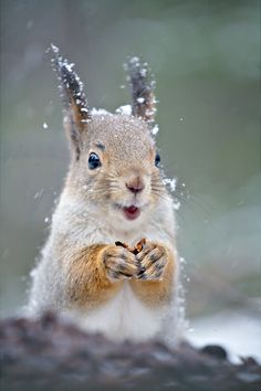 Happiest Little Squirrel Ever !