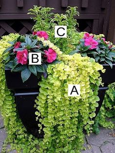 Container Gardening made simple! This site tells you what to plant together