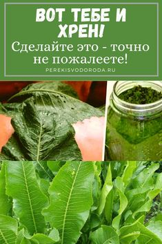 Introduction Global health is experiencing a record influx of public and private actors with unprecedented levels of funding directed to global heath activities. Alternative Treatments, Healthy Life, Spinach, Remedies, Homemade, Vegetables, Recipes, Food, Turmeric Health