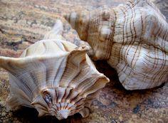 *Shells