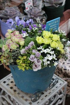 Pretty Flowers, Container Gardening, Outdoor Gardens, Outdoor Living, Plants, Beautiful Flowers, Outdoor Life, Flora, Container Garden
