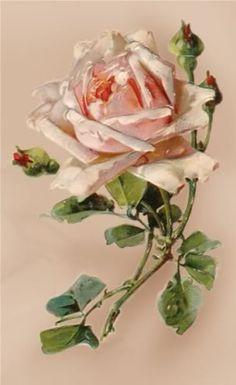 pink rose photo H18-ROSE.jpg