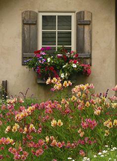 shutters & windowbox