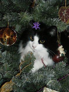 Un gato para Navidad