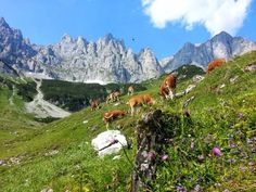 Der Wilde Kaiser ist eines der spektakulärsten Bergmassive der Alpen. Auf der dreitägigen Hüttenwanderung erwandern Sie die schönsten Plätze an der Südseite des Kaisergebirges.  http://www.weitwanderwege.com/wege/3-tage-huettenwanderung/  © Bild: TVB Wilder Kaiser #wandern #weitwandern #weitwanderwege #trekking #hüttenwanderung #wilderkaiser #tirol