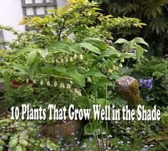 Simple  Plants That Will Grow in the Shade