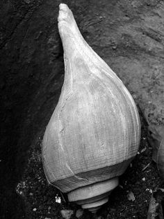 shell   Morgaen Muñoz