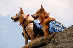 """Bring this gear for family dog on day hikes. Read more tips for day hiking with children in """"Hikes with Tykes: A Practical Guide to Day Hiking with Kids."""""""