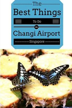 From the butterfly garden to free massages, here are ten of the best things to do in Changi Airport, Singapore. It's easy to see why it's won hundreds of Best Airport in the World awards