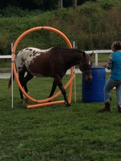 pool noodle for horse riding | Pool Noodle Horses