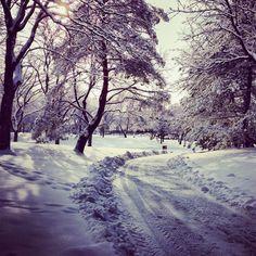 University of Utah campus during winter University Of Utah, Graduate School, College Life, Natural Beauty, Future, Winter, Places, Outdoor, Winter Time