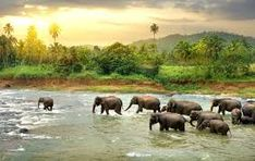 Resultado de imagem para Giants elefants