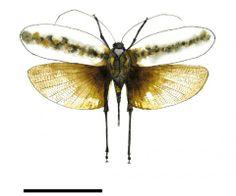 Caius Guo-Qiangium  Papillons de collection | Le Cabinet de curiosités www.facebook.com/...