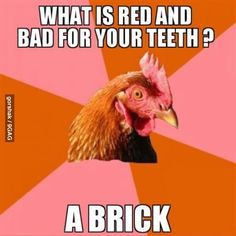 anti joke chicken. Repinning this because My husband laughed so freaking hard at it.