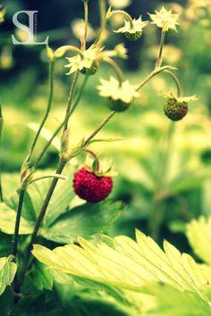 Sommergefühle - Erdbeeren