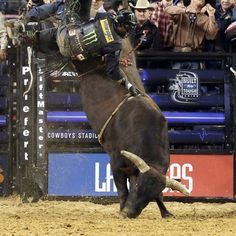 2012 bucking bull of the year, Asteroid