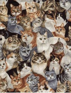 This is a design by Helen Vladykina, fabric printed by Robert Kaufman about 10 years ago. I still have some!! =^..^=