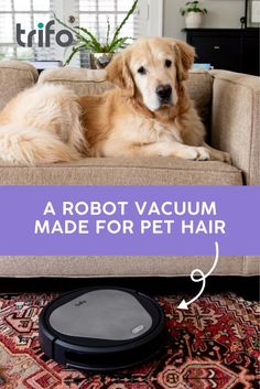 House Cleaning Tips, Cleaning Hacks, Dog Spa, Family Wall Decor, North Carolina Homes, House Hacks, Entry Level, Loose Weight, Cat Breeds